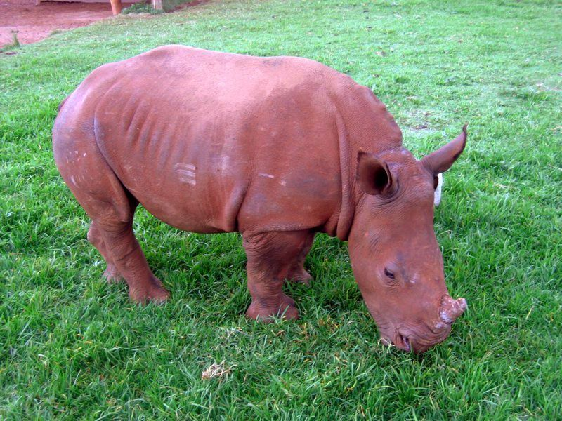 The rhino. She was upset that day