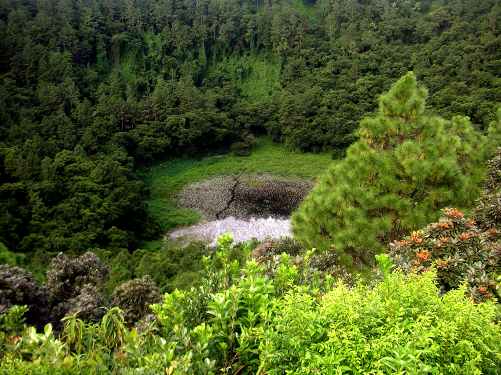 The volcanic crater at Trou aux Cerfs