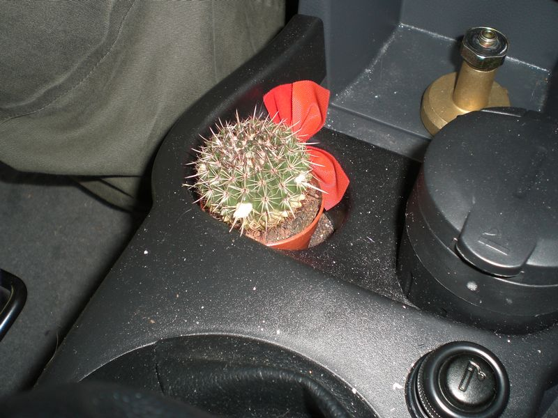 She's growing a cactus inside the car...